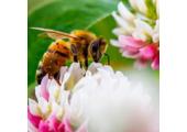 Importanta mierii pentru sanatatea si starea noastra de bine