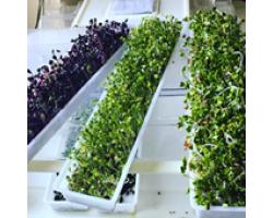 Cum sa gatesti semintele germinate